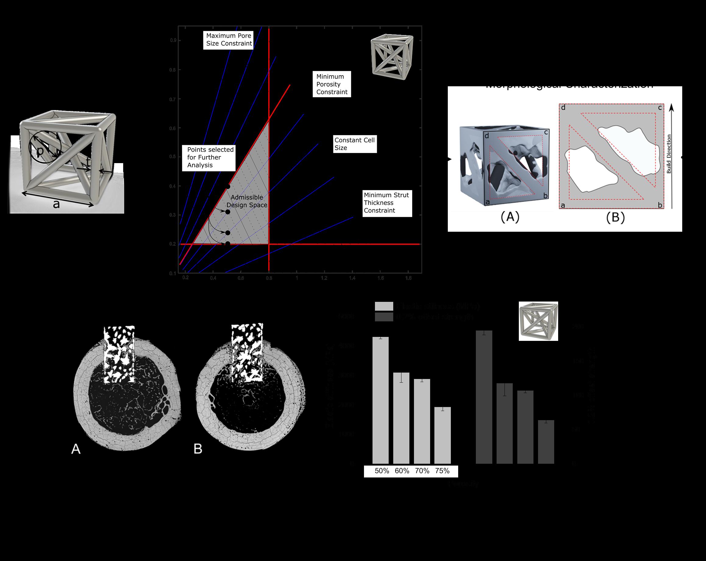 Porous biomaterials